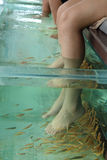 Fish Spa Skin Therapy Stock Photo