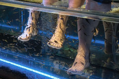 Fish spa skin therapy. A fish spa where hundreds of small fish eat away dead skin Royalty Free Stock Photos