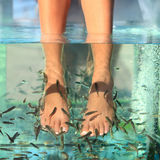 Fish Spa Skin Treatment. Fish spa feet pedicure skin care treatment with the fish rufa garra, also called doctor fish, nibble fish and kangal fish stock image