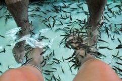 Fish spa therapie Stock Foto