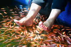 Fish Spa Therapy At Madu River In Sri Lanka. Madu River Fish Spa Tanks Are Floating In The River And They Are Stocked With Large Number Of Fish Royalty Free Stock Image