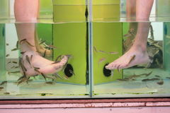 Fish spa treatment Stock Images