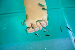 Fish spa treatment, garra rufa fish Stock Photo