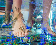Fish spa treatment. Treating kids with fish spa Stock Images
