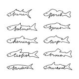 Fish species with lettering. Hand drawn fish species with lettering Royalty Free Stock Photography