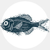 Fish species, vector marine fauna symbol. Hand drawn silhouette Stock Photography