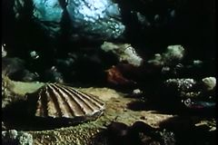 Fish speeding past clam with pocket watch inside shell stock video