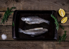 Fish with spices and herbs Stock Photos