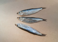 Fish-sprat. Baltic sprat is a small fish of spicy salting Stock Photo