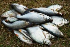 Fish, spring fishing Stock Photo