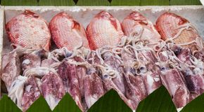 Fish and squid on display in ice. Fish and squid on display packed on ice for street food cooking in Bangkok Thailand royalty free stock photography