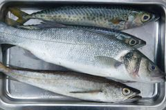 Fish  on stainless steel tray Royalty Free Stock Image