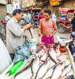Fish stall at the Chawri Bazar in Delhi, India Royalty Free Stock Image