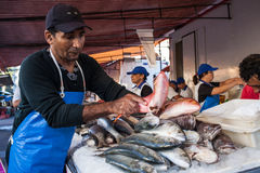 Fish stall Stock Images