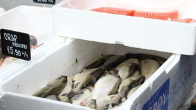 Fish Stand at Market stock video footage