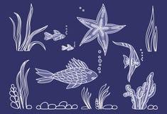 Fish,star, algae on seabed. Blue background Stock Images