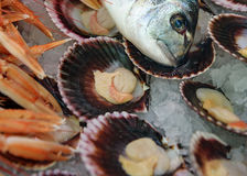 Fish still life. Dorado head, mussels in shells on ice. Fresh mix seafood. Top view. Close up Royalty Free Stock Photography