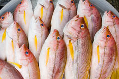 Fish stock Royalty Free Stock Photography
