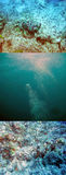 Fish stone masked at the bottom . Synanceia verrucosa Stock Photo