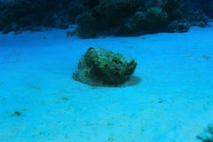 Fish stone in sea Royalty Free Stock Photography
