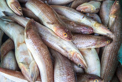 Fish Store Royalty Free Stock Photos