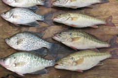 Fish For Supper! Royalty Free Stock Photo