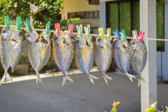 Fish are suspended on a rope and dried Royalty Free Stock Photography