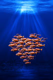 Fish swarm forming a heart Royalty Free Stock Images