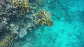 Fish swim against the background of coral reefs stock video footage
