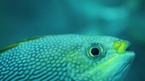 Fish swim in the aquarium stock video footage