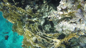 Fish swim among coral stock video footage