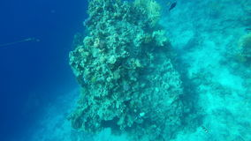 Fish swim among the coral reefs stock video