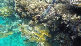 Fish swim near coral reefs stock video footage