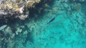 Fish swim near the reef with coral stock video