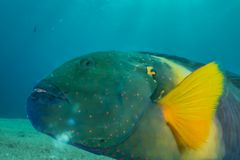 Fish swim in the Red Sea stock photography