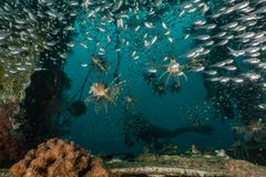 Fish swim in the Red Sea. Colorful fish, Eilat Israel royalty free stock photos
