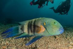 Fish swim in the Red Sea. Colorful fish, Eilat Israel royalty free stock images