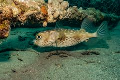 Fish swim in the Red Sea. Colorful fish, Eilat Israel royalty free stock image