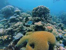 Fish on the Great Barrier Reef. Fish swimming above coral heads on the Great Barrier Reef outside Port Douglas, Australia Stock Photo
