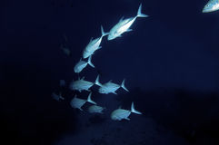 Fish swimming into abyss Stock Photo