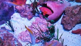Fish swimming acquarium. Fish swimming in the acquarium with amphora stock video footage