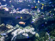 fish swimming against blue abstract background stock images