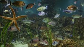 Fish swimming in aquarium stock video