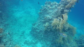 Fish swimming around a reef. Slow motion stock video footage