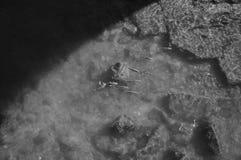 Fish swimming below the bridge Stock Photos