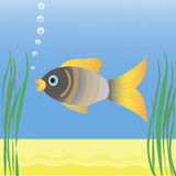Fish swimming in blue water. Between algae Royalty Free Stock Photos