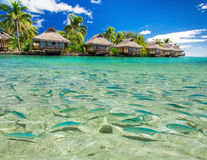 Fish swimming in the lagoon with overwater villas and palm trees Stock Photo
