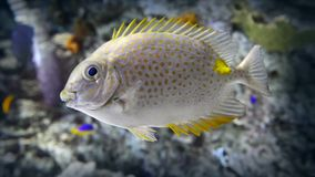 Fish stock video footage