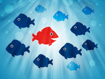 Fish swimming opposite direction Royalty Free Stock Photo