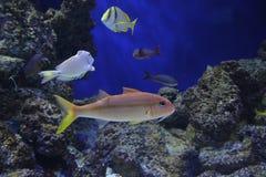 Fish swimming in S.E.A. aquarium at Singapore